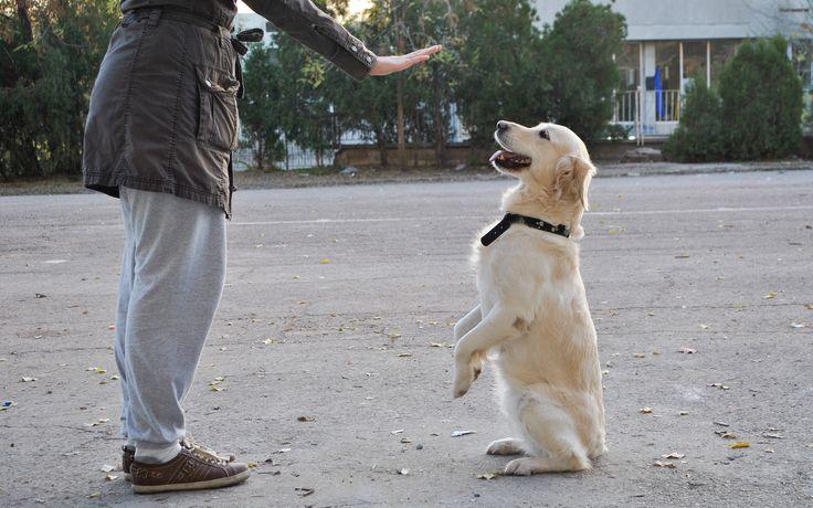How to Become a Dog Trainer -- via wikiHow.com