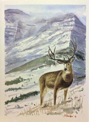 Mule deer - watercolour cm 28x38