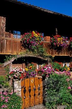 Deutchland Blumen