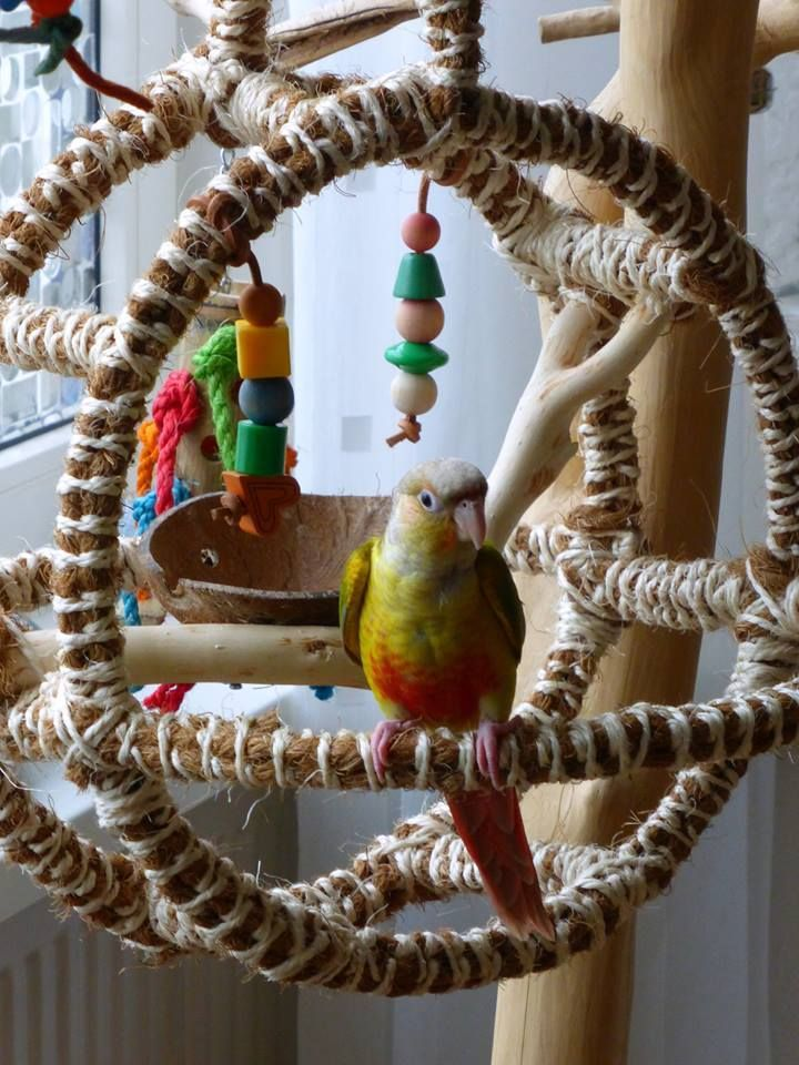 1000 Images About Bird Diy Stuff On Pinterest Toys