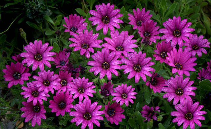 faire livrer des fleurs 75 #fleurs #bouquet