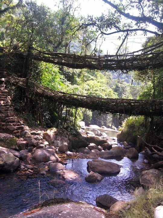 Double Decker Root Bridge, Cherrapunji, Meghalaya, India.