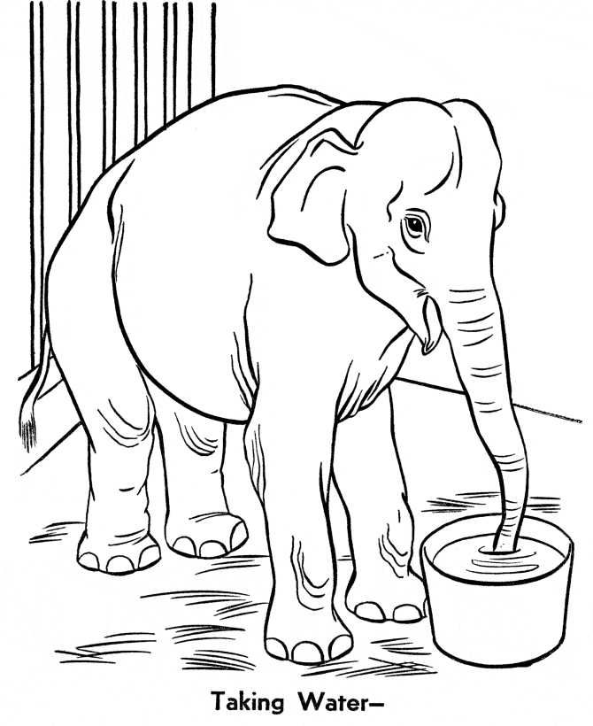 Free Zoo Coloring Pages Printable Free Coloring Sheets Zoo Animal Coloring Pages Elephant Coloring Page Animal Coloring Pages