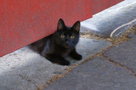 陽気なマドリードの街を気ままに散歩する猫たち【画像集】