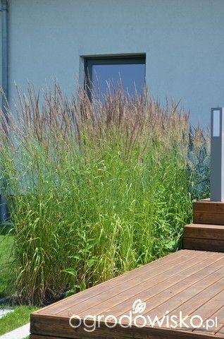 Ogród tworzę nowoczesny czyli wewnętrzna walka jak nie zostać kokoszką :) - strona 987 - Forum ogrodnicze - Ogrodowisko