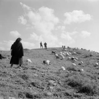 Greece, shepherds watching sheep graze on hill in Métsovon :: AGSL Digital Photo Archive - Europe