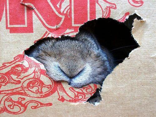 om noms: Bunnies Friends, Cardboard Boxes, Pet Bunnies, Bunnies Boxes, Animal Friends, Paper Boxes, Bunbun Eating, Bunnies Rabbit, Bunnies Nose