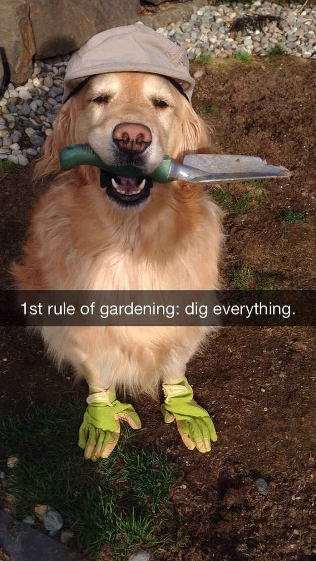 how to break a dog from digging holes