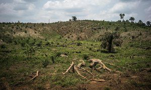 One in five of world's plant species at risk of extinction Global report highlights threat to food security and medicine supplies but also reveals 2,000 new species are discovered each year.   Deforestation due to land clearing for palm oil production
