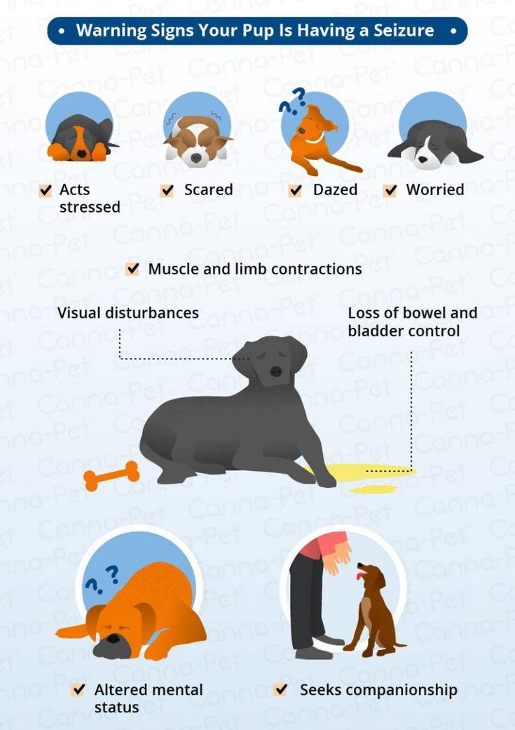 Dog seizure symptoms natural remedies dog seizures