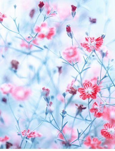 Spring│Primavera - #Spring