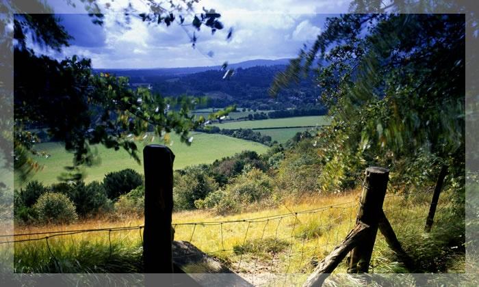 Box Hill Surrey Uk Home In Surrey Before Leaving Uk Pinterest