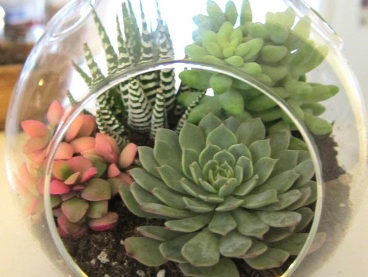 Indoor succulent plants the plaid pigeon homegoods pinterest glasses hanging succulents - Cool succulent plants ...