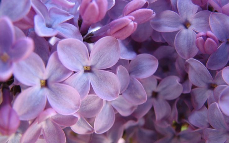 38 best proudly purple images on Pinterest | Purple flowers, The ...