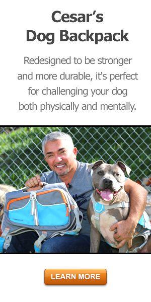 Cesar Homemade Dog Treats