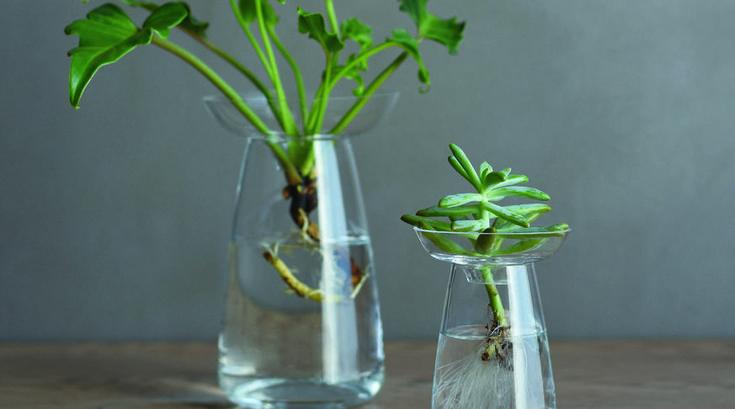 Aqua Culture vases by Kinto