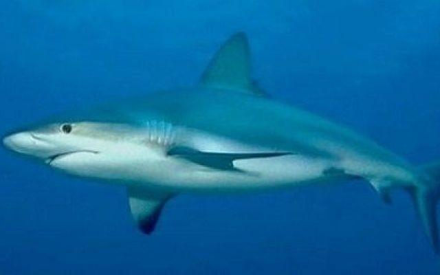 Avvistato squalo al porto di Palermo