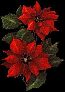Blog para una Navidad Feliz: Gifs Flores Navideñas