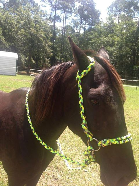 156 best images about bridles on pinterest for Cool things made out of horseshoes