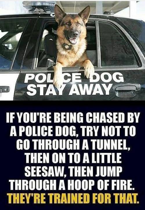 28 best Police Dog Humor images on Pinterest | Military ...