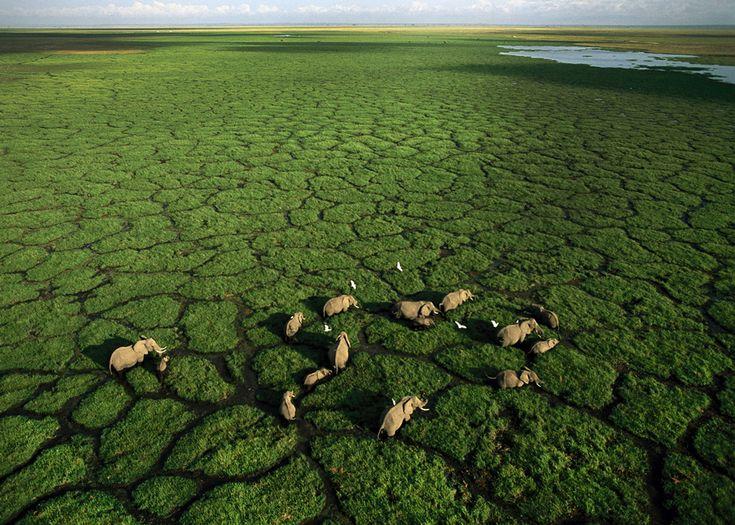 L'ultimo rifugio. Un branco di elefanti nelle paludi del parco nazionale Amboseli, nel sud del Kenya. - (George Steinmetz)