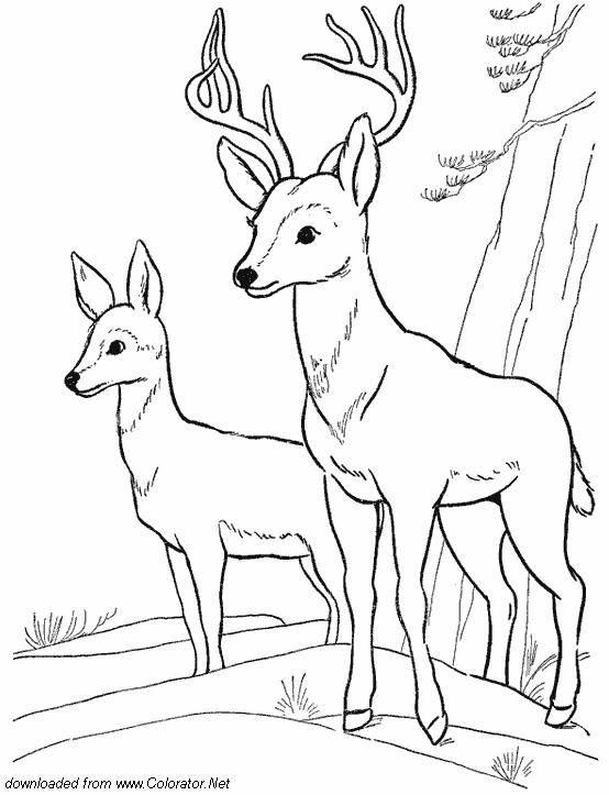 Mejores 157 imágenes de animaux de la forêt en Pinterest | Libros ...