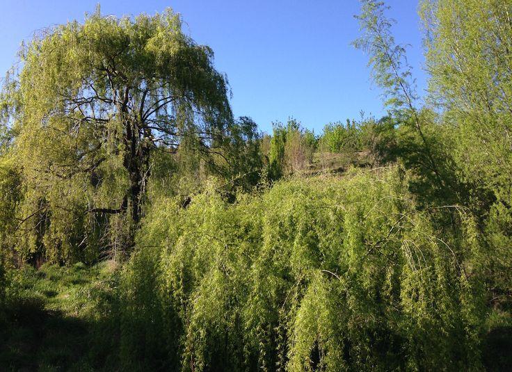 Tauroa Valley