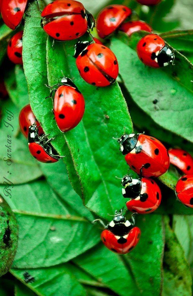 Ich habe als Kind Marienkäfer gesucht. Dabei bin ich im Gras eingeschlafen und als ich aufwachte, war ich mit Marienkäfern übersät...