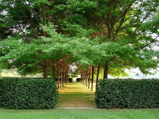 modernist gardens - Google Search