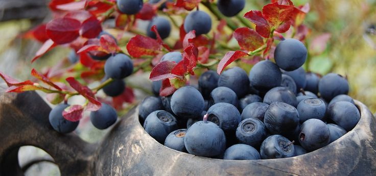 """Kuksa"", a traditional wooden cup, full of blueberries fresh from the forest"