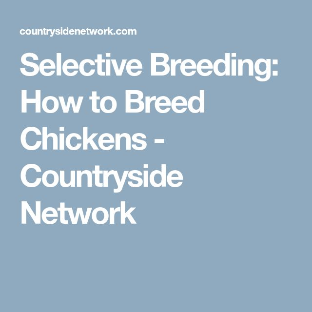 Selective Breeding: How to Breed Chickens - Countryside Network