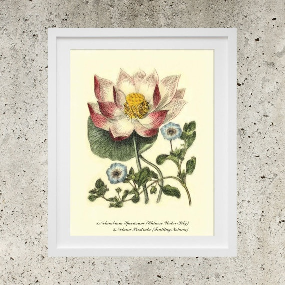 SALE Wall Art  Poster Download  Vintage Botanic by DigitalBanana Chinese Water-Lily