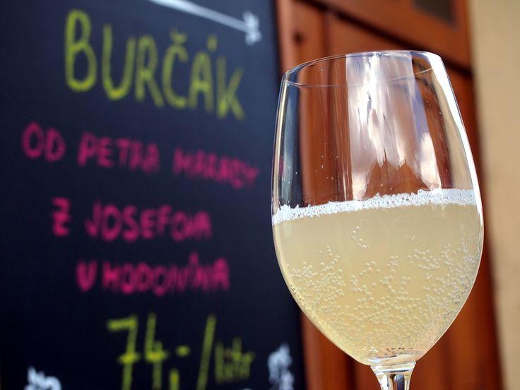 Opět po roce Vám můžeme nabídnout vynikající pravý moravský burčák. Tentokrát se jedná o odrůdu Müller Thurgau z vinařství Petra Marady. Hrozny uzrály na vinici Josefov u Hodonína.