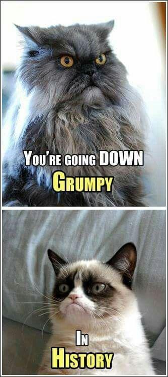 Haha! Grumpy cat ll