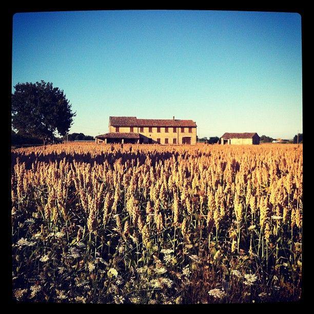 paesaggi romagnoli  www.weekendagogo.it #weekendagogo #campagna #romagna