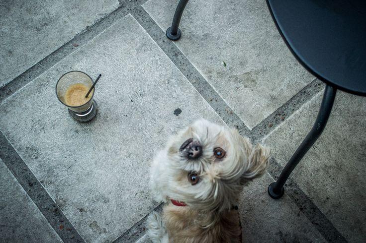Φιλαράκι, dat coffee is mine! ...Μόλις ξύπνησα, μη με ζορίζεις #arive #photo #12_09_13 www.arive.gr/photos.html
