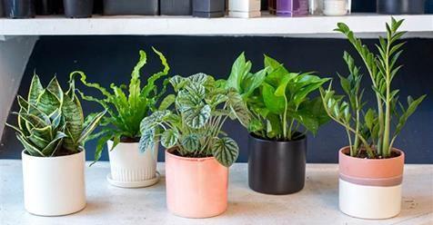 Ez az 5 növény a hálószobádban teljesen megjavítja az alvásodat…