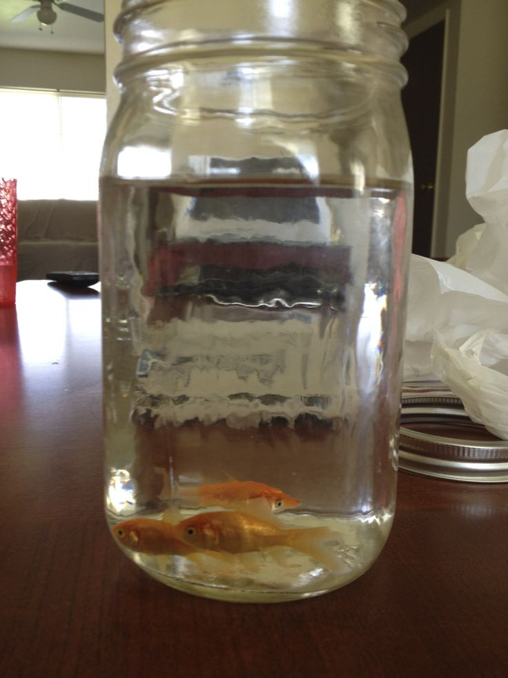 70 best images about fish on pinterest betta fish tank for Fish in a jar