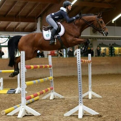 Amazing Equestrian Show Jumping Babe Sports Women