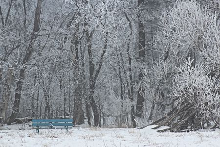 Frosty day Photo by Cendrine Marrouat — National Geographic Your Shot