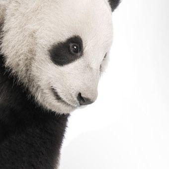 endangered Species   Protecting Wildlife   World Wildlife Fund