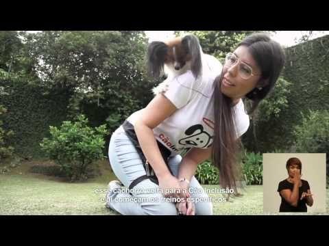 Cães de serviço para cadeirantes   Cão Inclusão - Amigos Cadeirantes