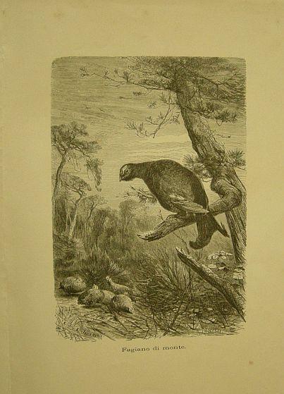 Jahrmargt K. - Kroner Ch. - Fagiano di monte. s.d. (ma 1900 ca.). Storia natule - Etologia - Animali - Uccelli - Ornitologia  - Stampa - Scienza -  -