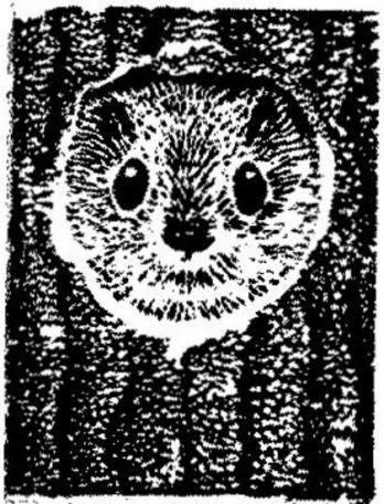 Taidelainaamo - Markku Tanttu: Liito-orava I, vedos