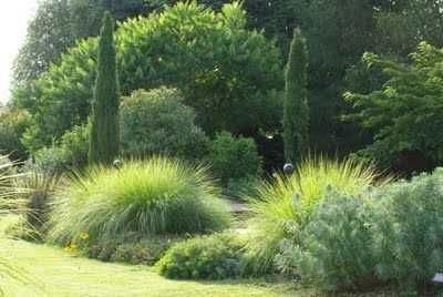 Decorative Grasses add a flow to the garden with a gentle breeze.