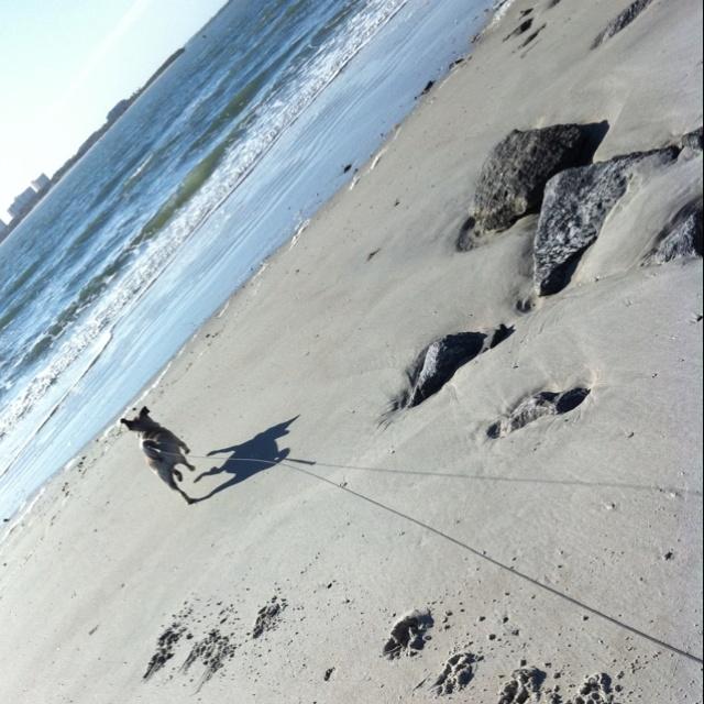 Dog Friendly Beaches Daytona Fl