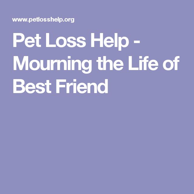 Pet Loss Help - Mourning the Life of  Best Friend