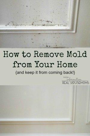 Best + Remove mold ideas on Pinterest