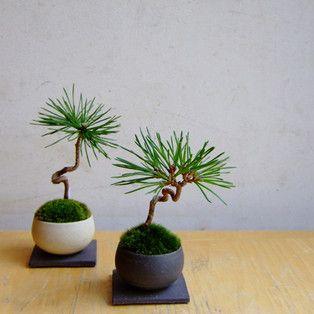 Bonsai...as your garden in a house.