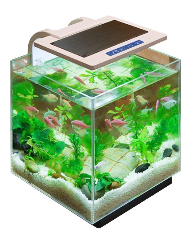 Penn plax simplicity pro 5 5 gallon aquarium with built in for 5 gallon fish tank filter